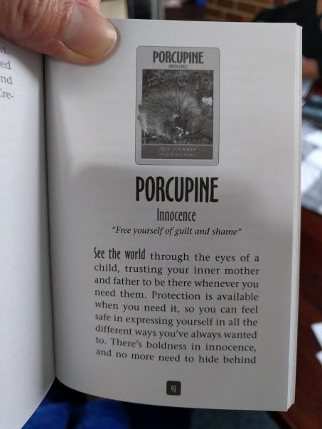 Porcupine echidna page Spirti Animals